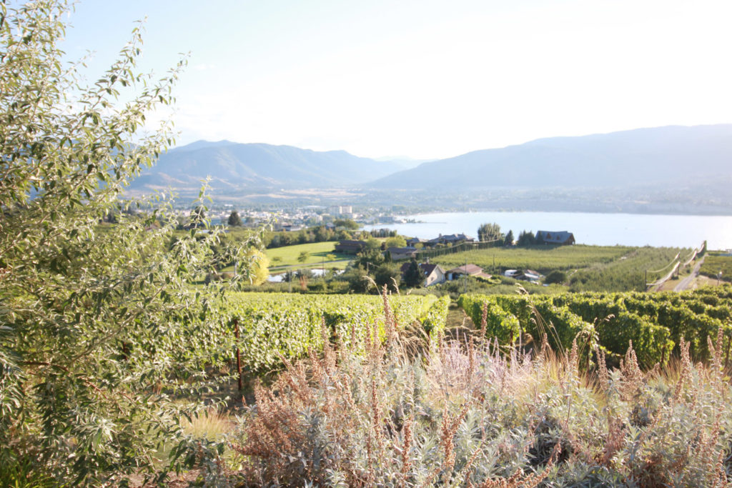 best weekend trips vancouver, weekend getaways in bc, summer trips in bc, where to go in the okanagan, penticton naramata bc, naramata bench guide