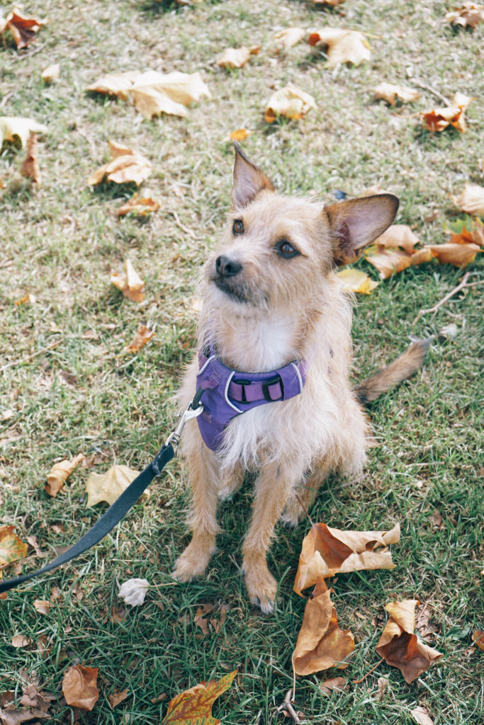 5 things every dog owner needs, helpful items for dog owners, alicia fashionista, vancouver lifestyle blog
